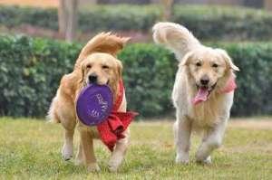 狗狗吐黄水的原因有哪些