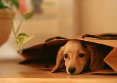 导致狗狗吐黄水有那几个原因